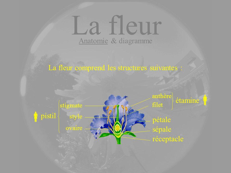 La fleur comprend les structures suivantes :