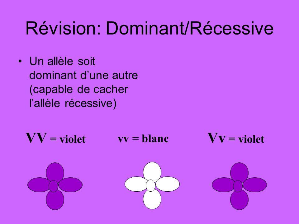 Révision: Dominant/Récessive