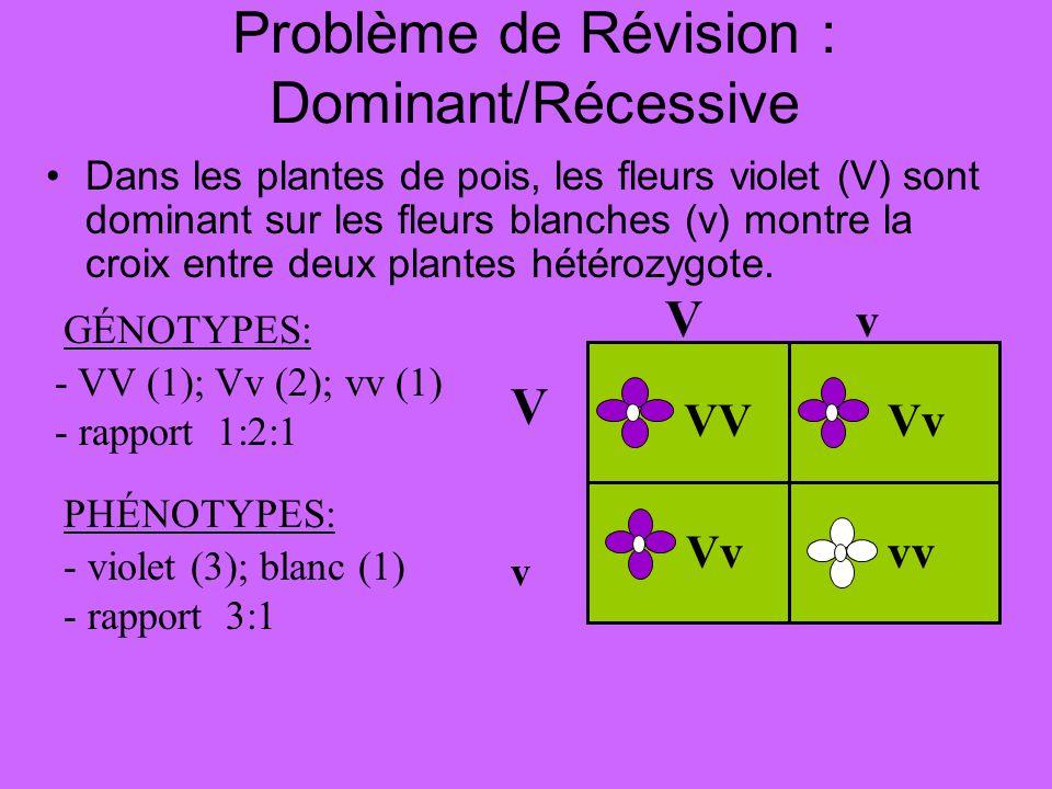 Problème de Révision : Dominant/Récessive