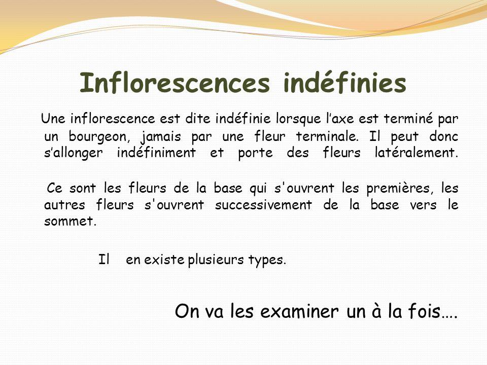 Inflorescences indéfinies
