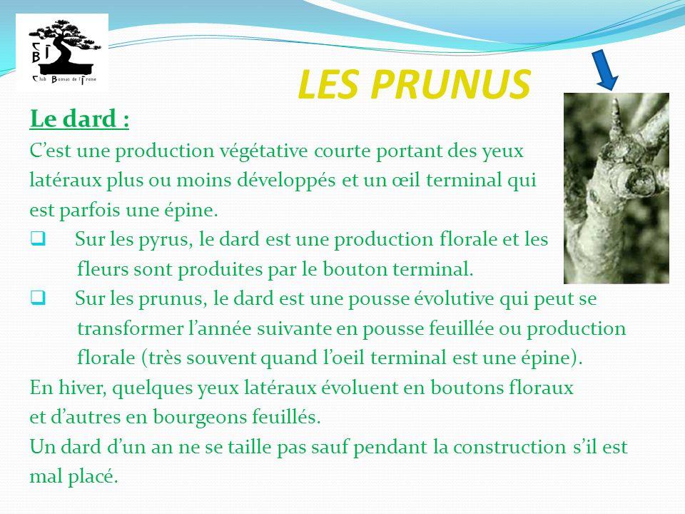 LES PRUNUS Le dard : C'est une production végétative courte portant des yeux. latéraux plus ou moins développés et un œil terminal qui.