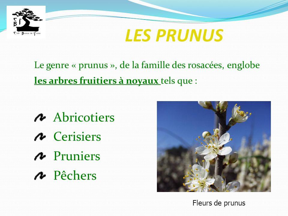 LES PRUNUS Abricotiers Cerisiers Pruniers Pêchers