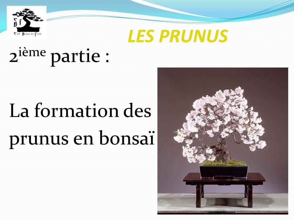 LES PRUNUS 2ième partie : La formation des prunus en bonsaï