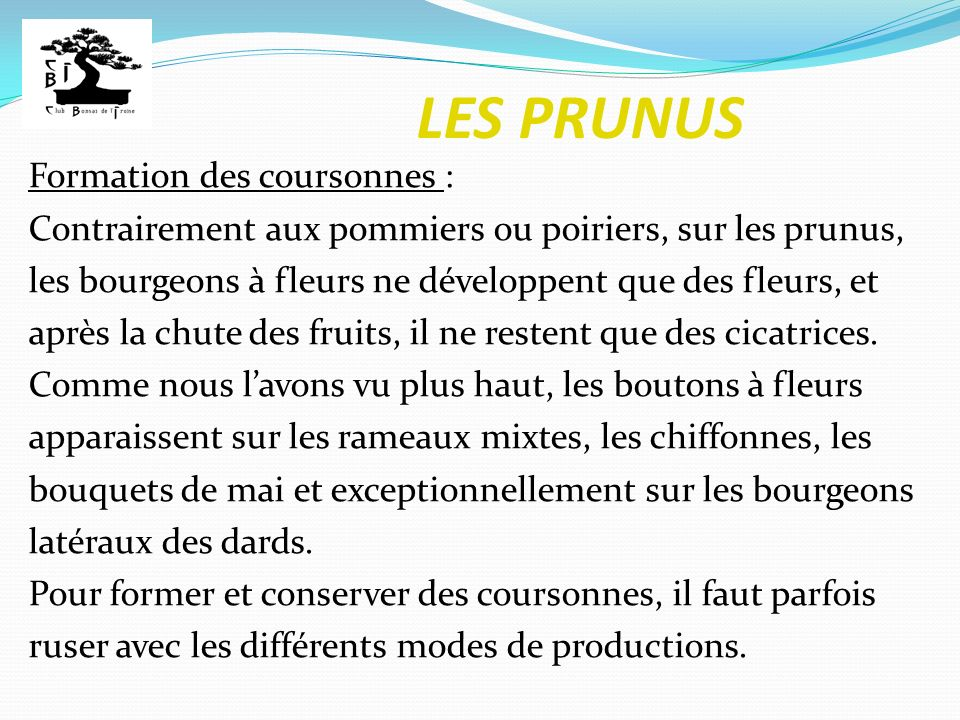 LES PRUNUS Formation des coursonnes :