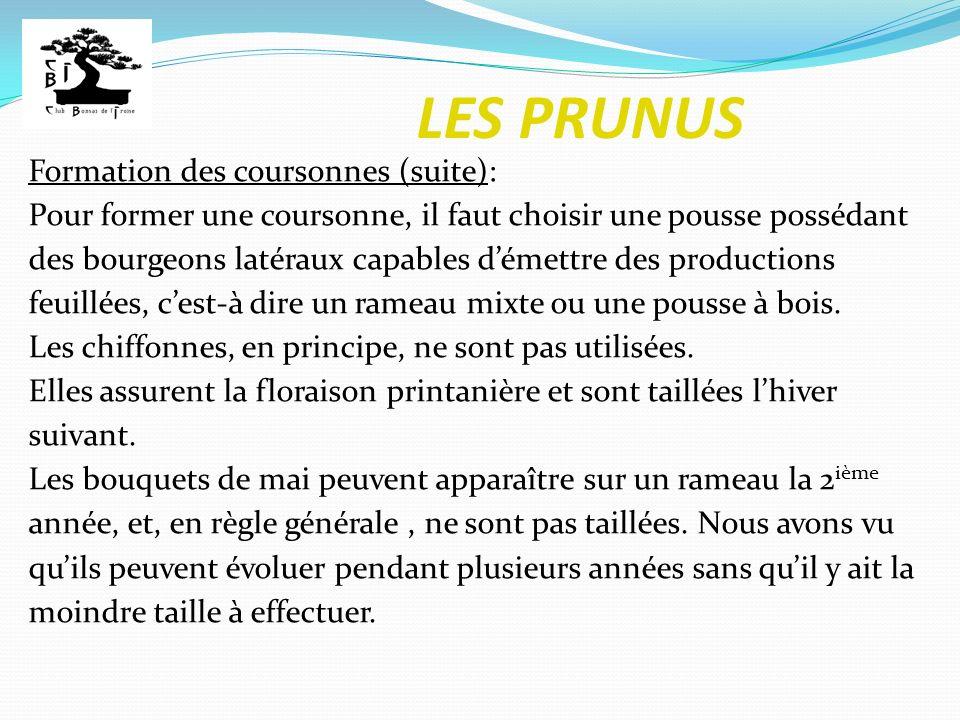 LES PRUNUS Formation des coursonnes (suite):
