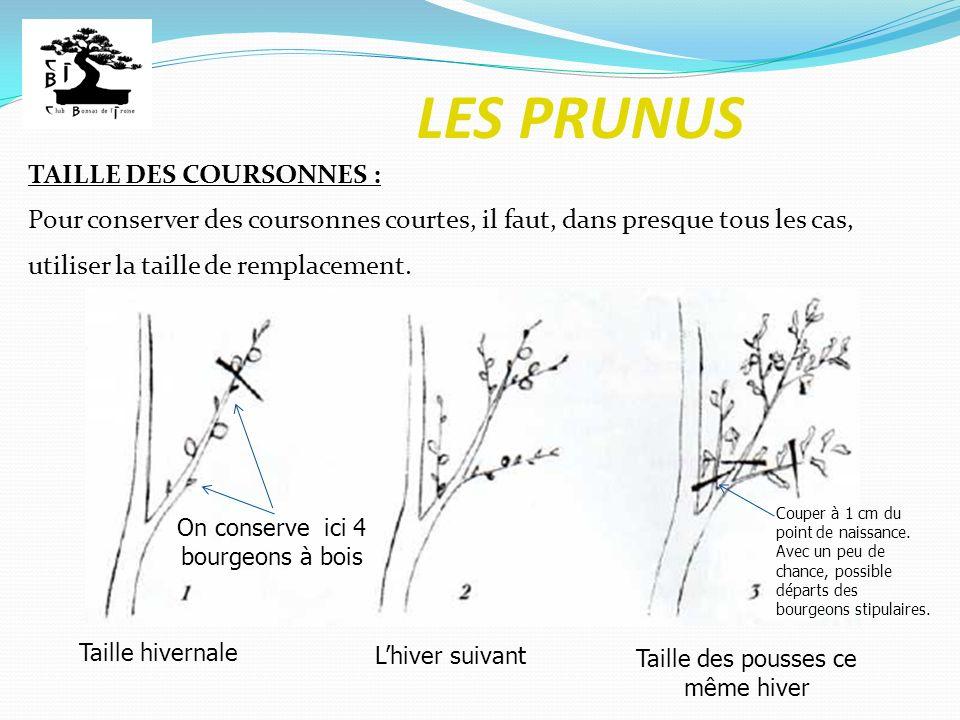 LES PRUNUS TAILLE DES COURSONNES :