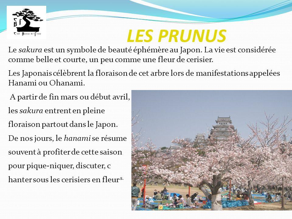 LES PRUNUS Le sakura est un symbole de beauté éphémère au Japon. La vie est considérée comme belle et courte, un peu comme une fleur de cerisier.