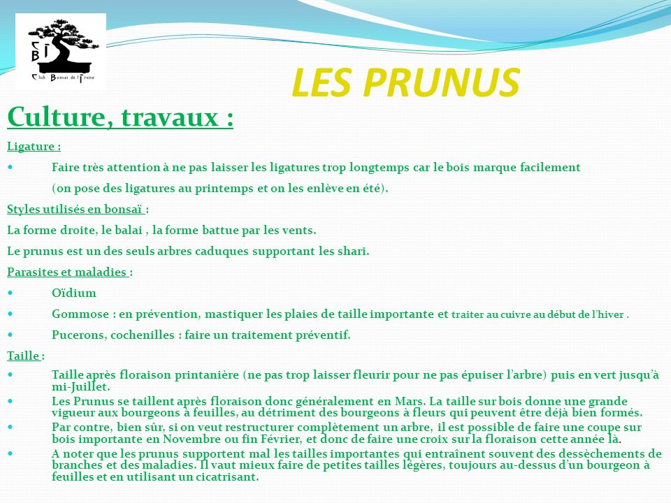 LES PRUNUS Culture, travaux : Ligature :