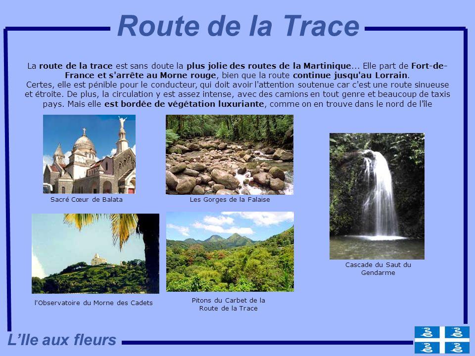 Route de la Trace L'Ile aux fleurs