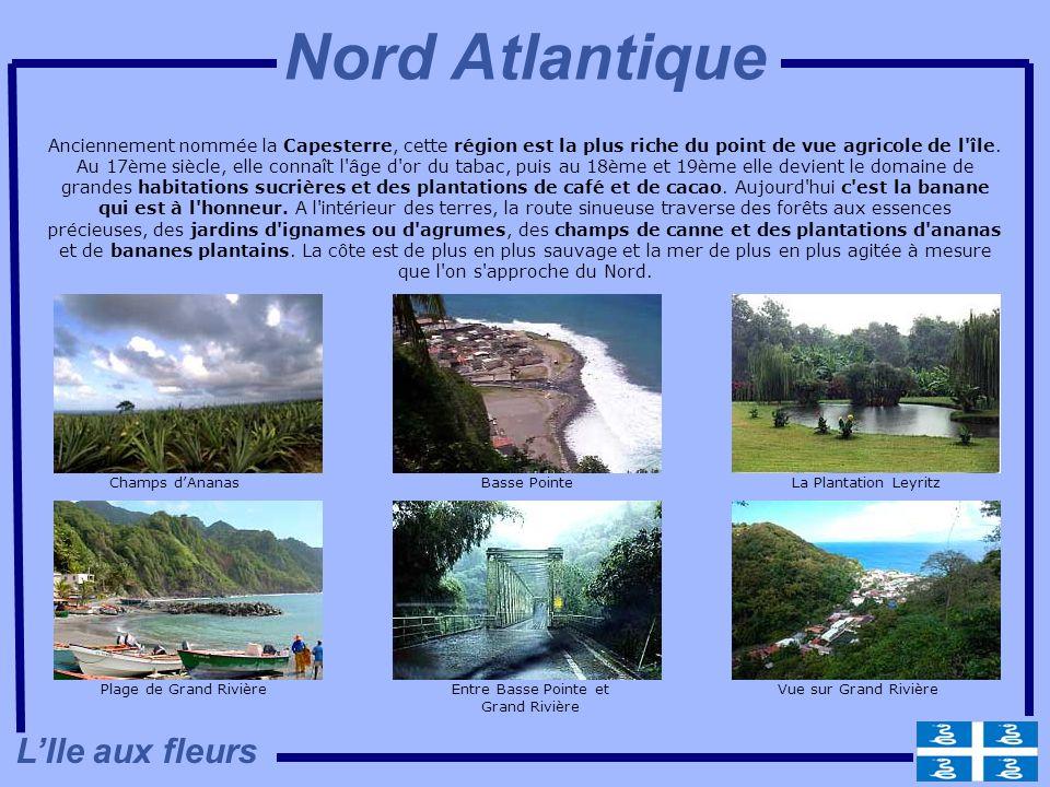 Entre Basse Pointe et Grand Rivière