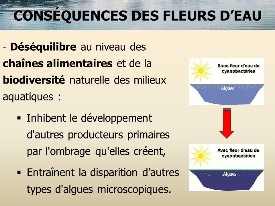 CONSÉQUENCES DES FLEURS D'EAU