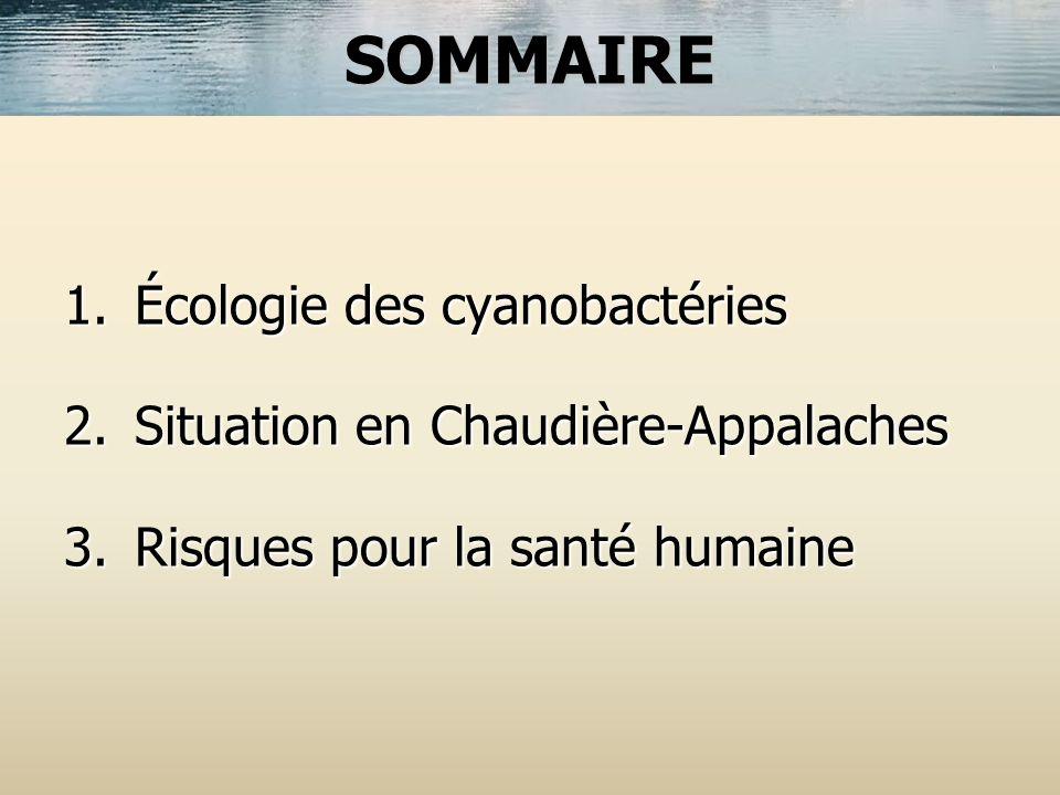 SOMMAIRE Écologie des cyanobactéries Situation en Chaudière-Appalaches