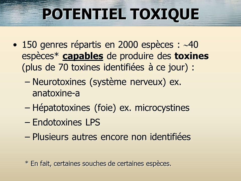 POTENTIEL TOXIQUE 150 genres répartis en 2000 espèces : 40 espèces* capables de produire des toxines (plus de 70 toxines identifiées à ce jour) :