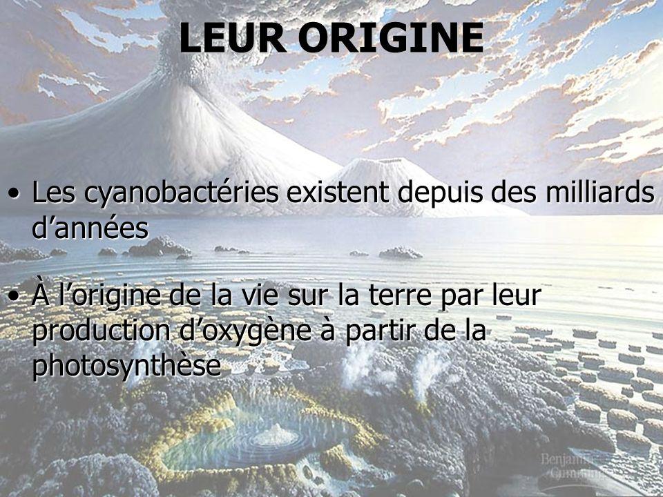 LEUR ORIGINE Les cyanobactéries existent depuis des milliards d'années