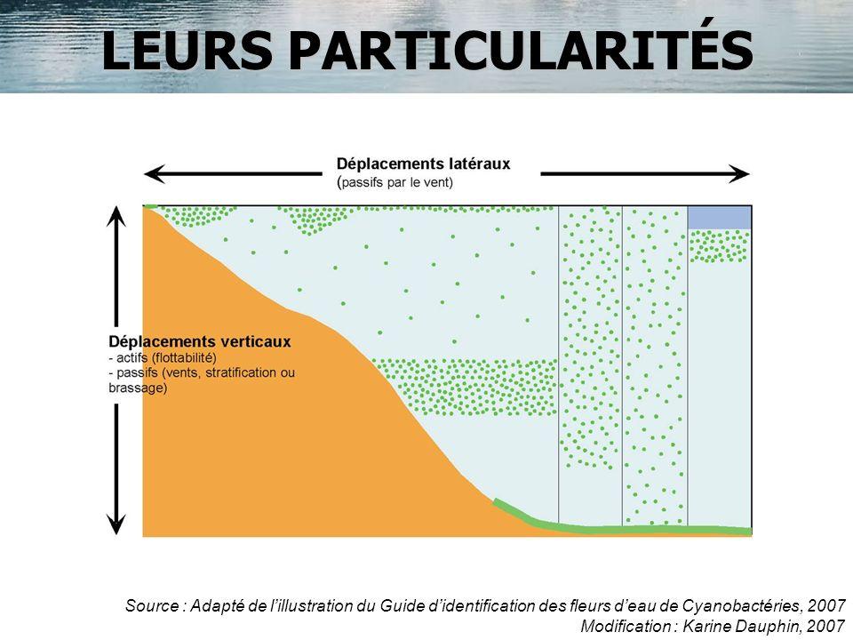LEURS PARTICULARITÉS Source : Adapté de l'illustration du Guide d'identification des fleurs d'eau de Cyanobactéries, 2007.