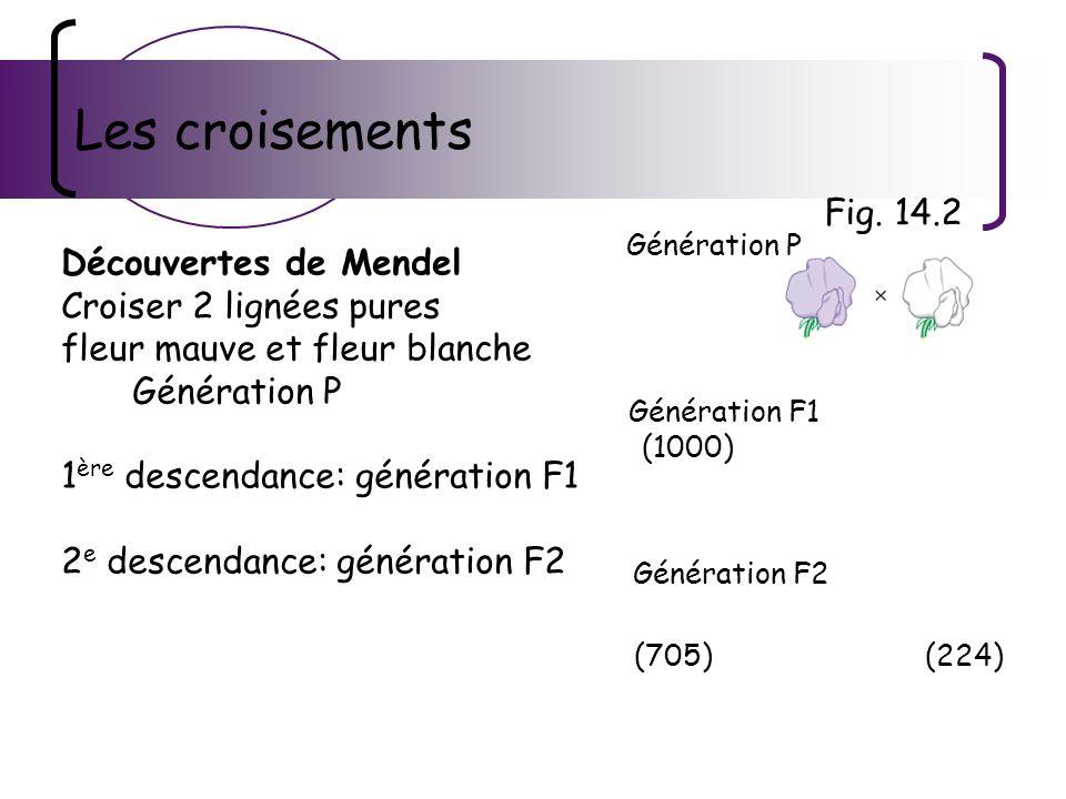 Les croisements Fig. 14.2 Découvertes de Mendel
