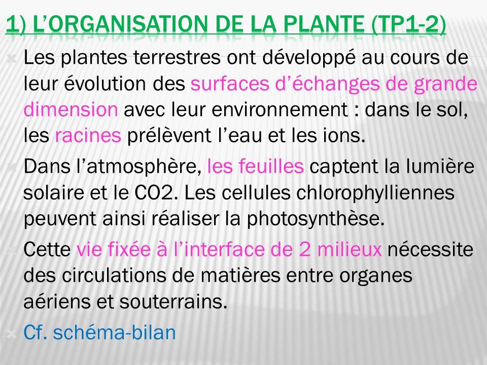 1) L'organisation de la plante (tp1-2)