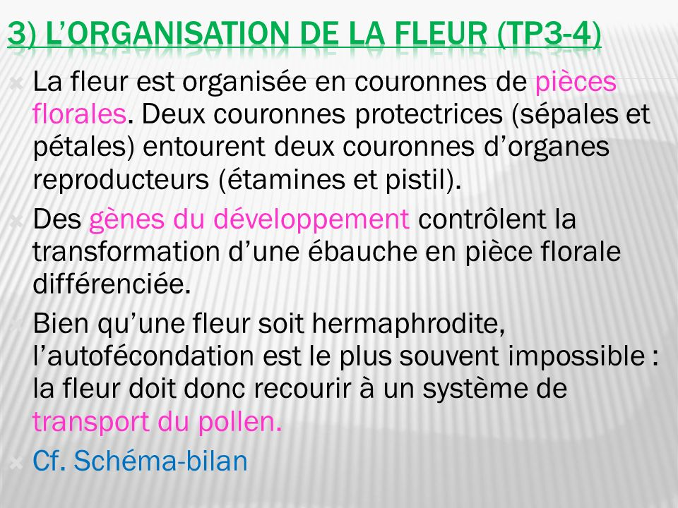 3) L'organisation de la fleur (tp3-4)