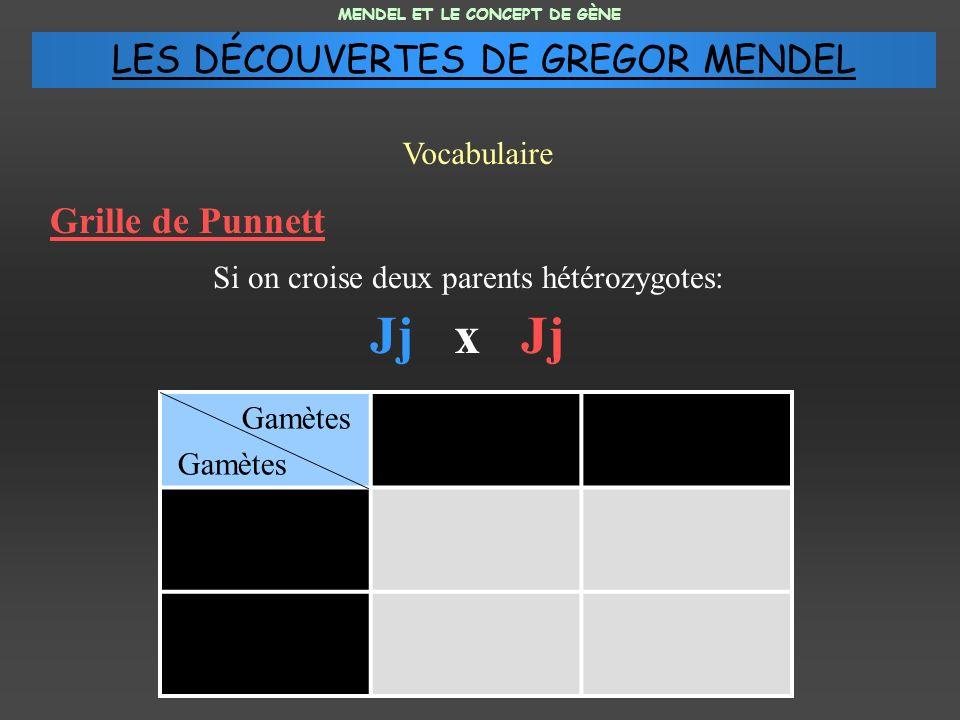 Jj x Jj LES DÉCOUVERTES DE GREGOR MENDEL Grille de Punnett Vocabulaire