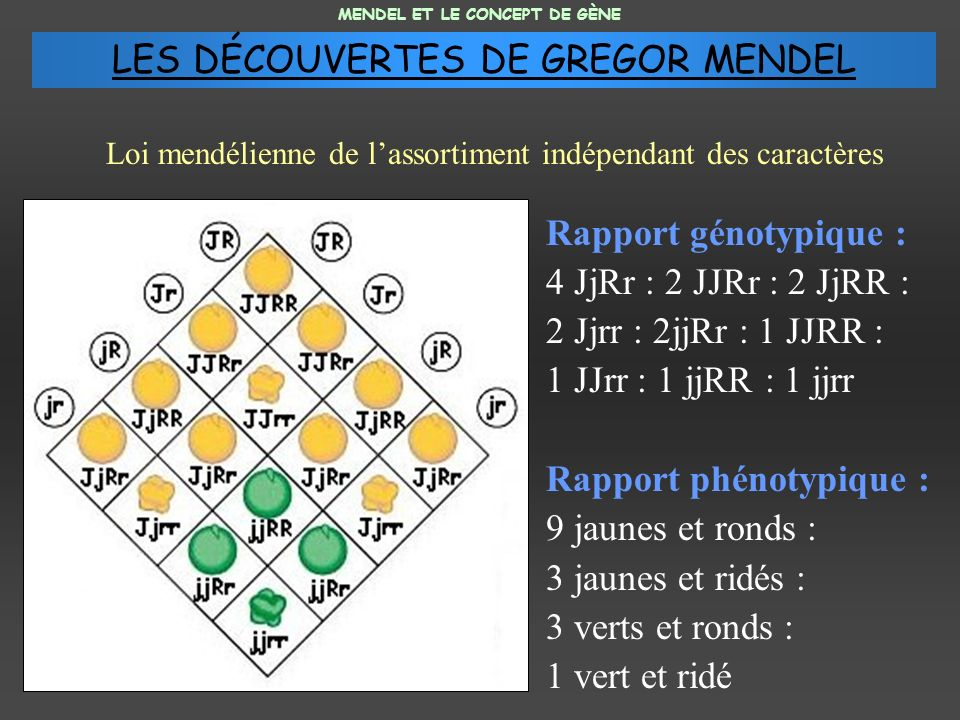 LES DÉCOUVERTES DE GREGOR MENDEL