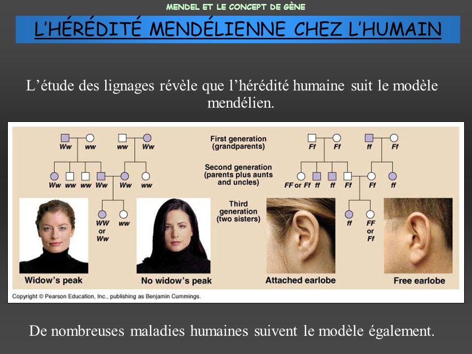 L'HÉRÉDITÉ MENDÉLIENNE CHEZ L'HUMAIN