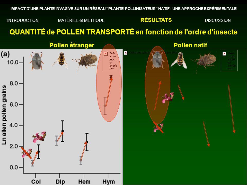 QUANTITÉ de POLLEN TRANSPORTÉ en fonction de l ordre d insecte