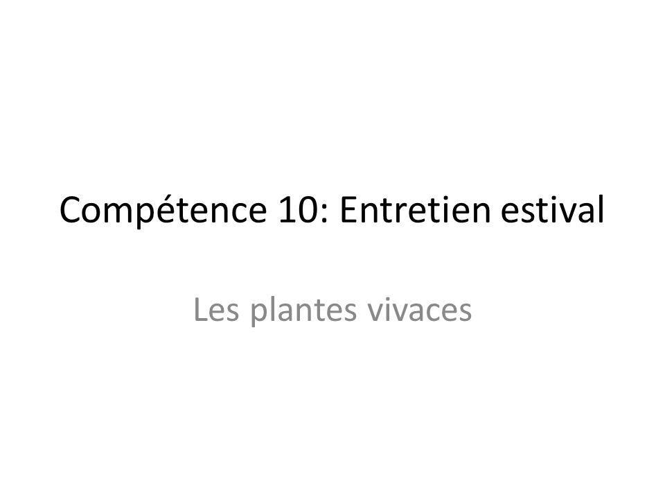 Compétence 10: Entretien estival