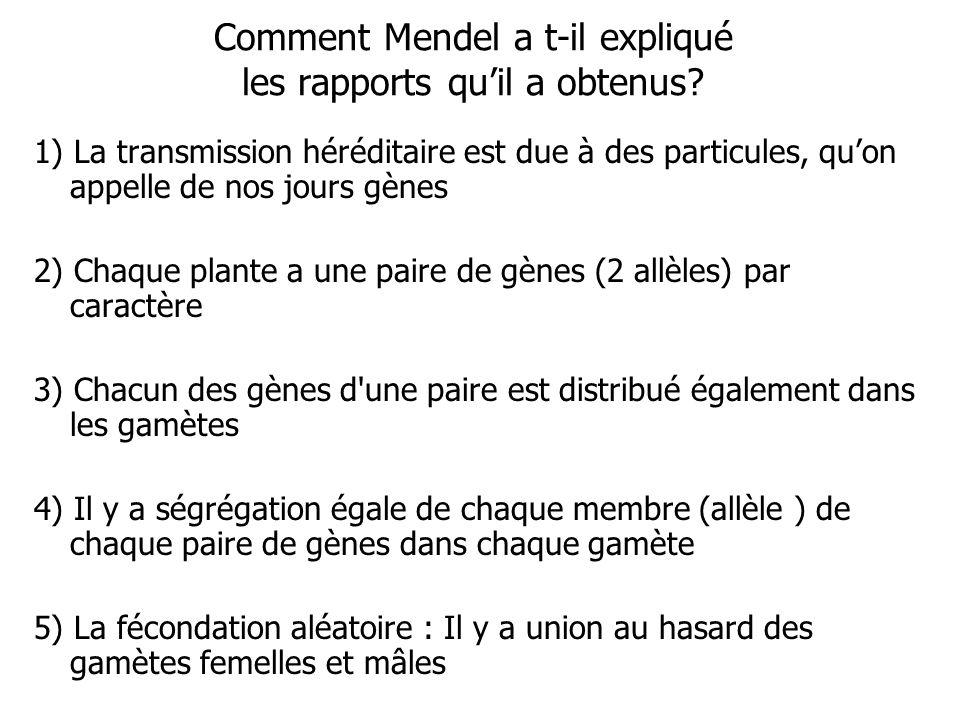 Comment Mendel a t-il expliqué les rapports qu'il a obtenus