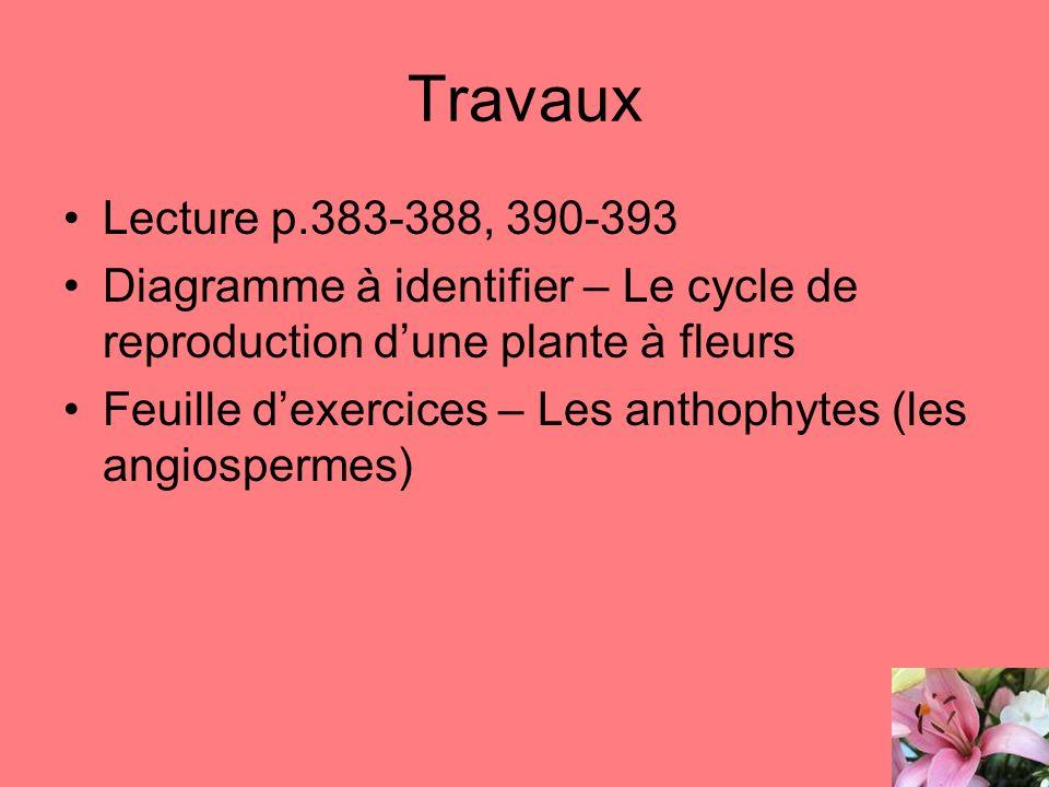 Travaux Lecture p.383-388, 390-393. Diagramme à identifier – Le cycle de reproduction d'une plante à fleurs.
