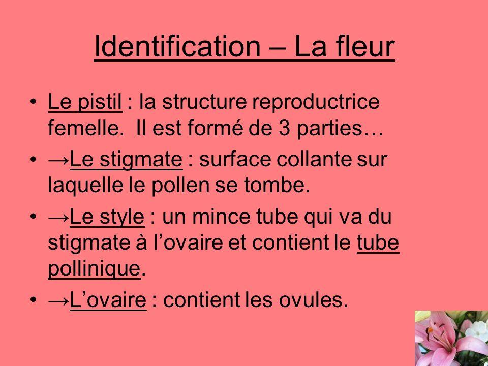 Identification – La fleur