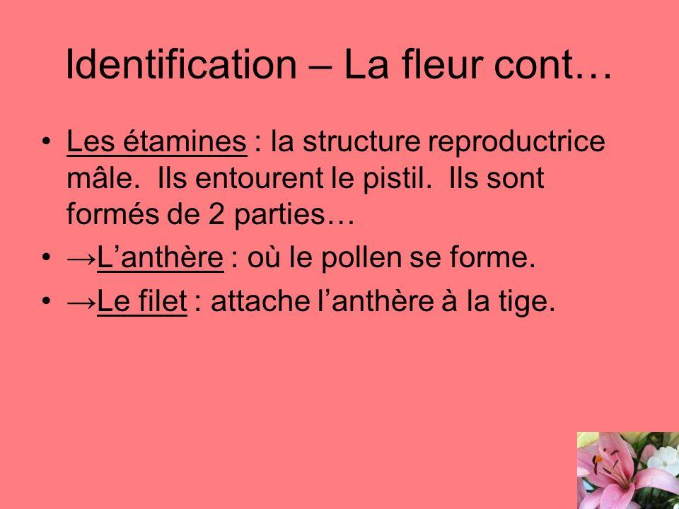 Identification – La fleur cont…