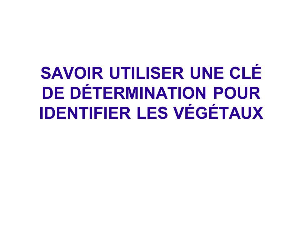 SAVOIR UTILISER UNE CLÉ DE DÉTERMINATION POUR IDENTIFIER LES VÉGÉTAUX
