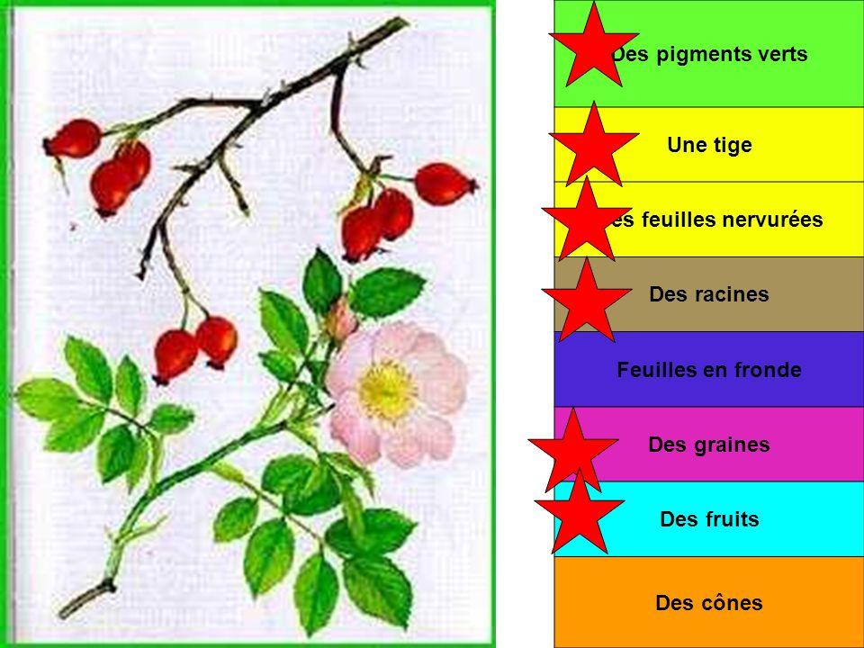 Des feuilles nervurées