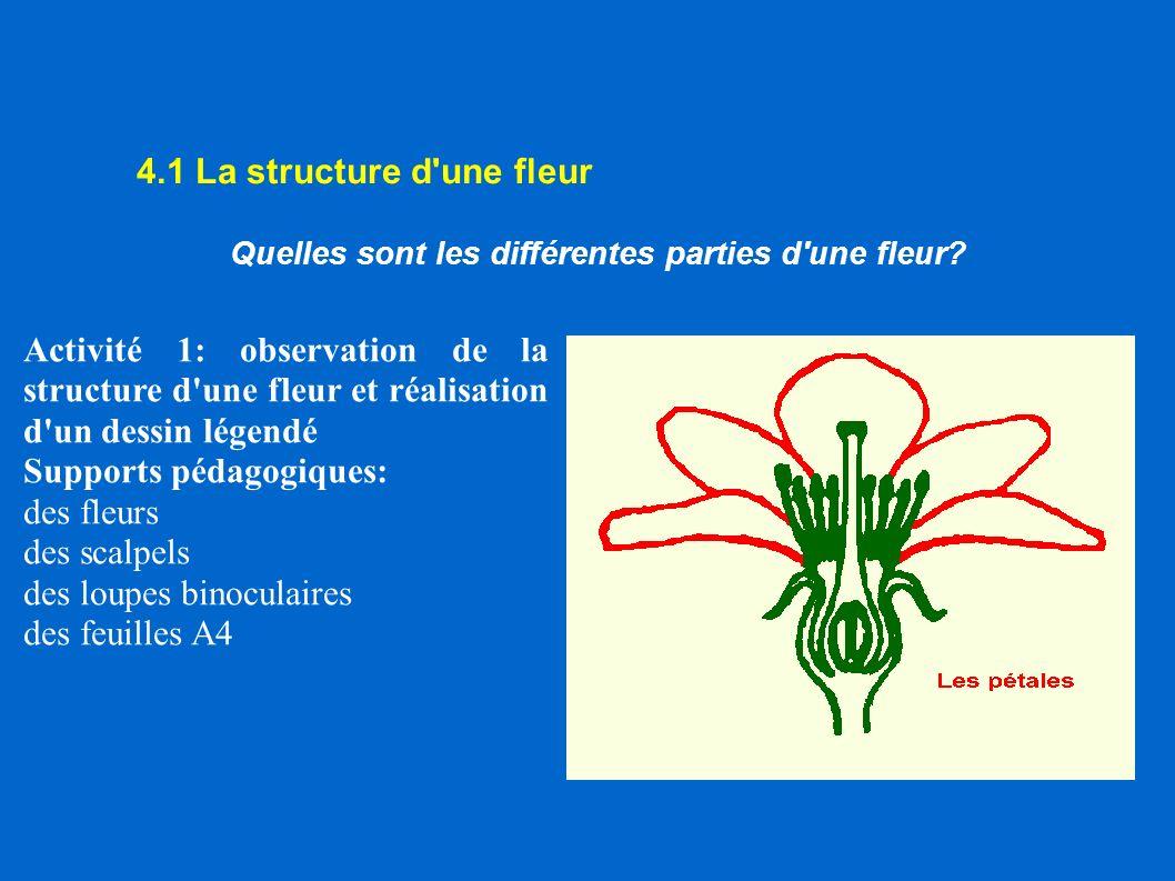 Quelles sont les différentes parties d une fleur