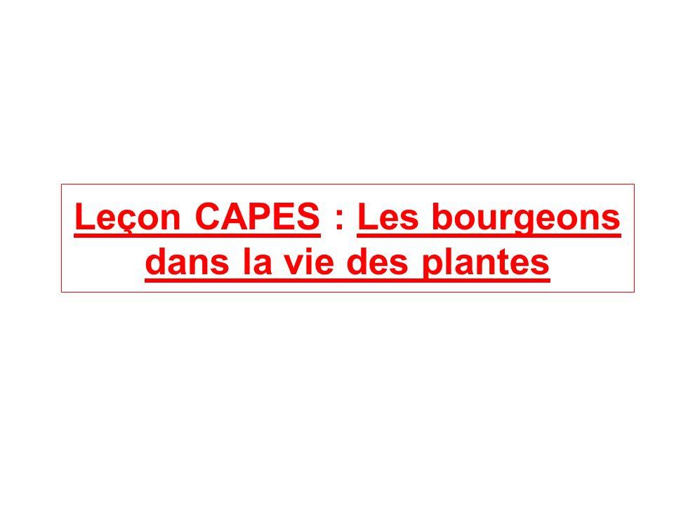 Leçon CAPES : Les bourgeons dans la vie des plantes