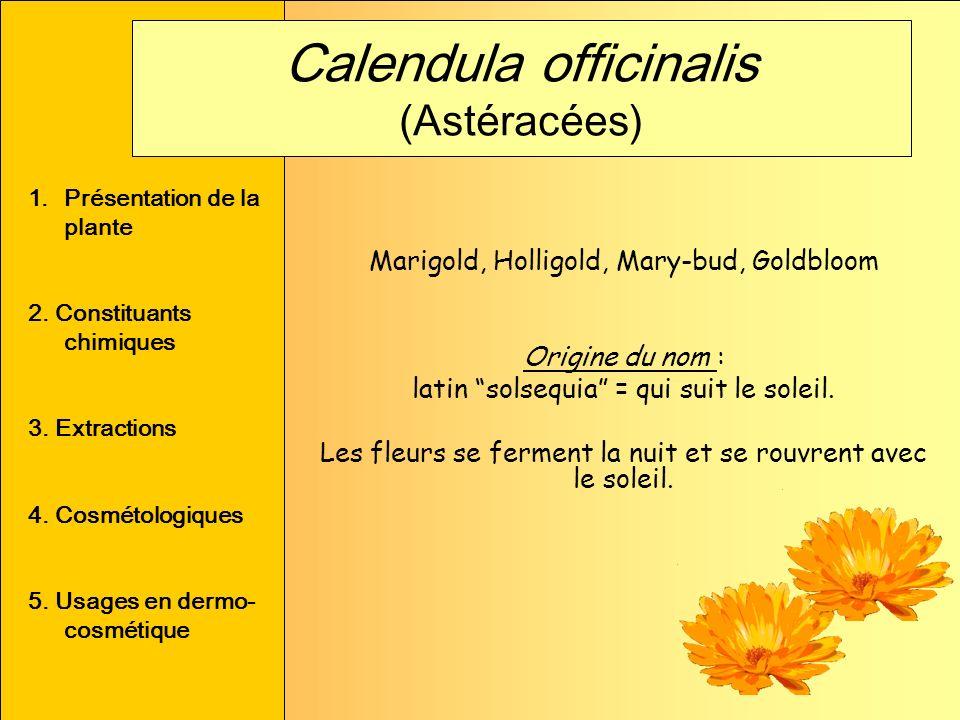 Calendula officinalis (Astéracées)