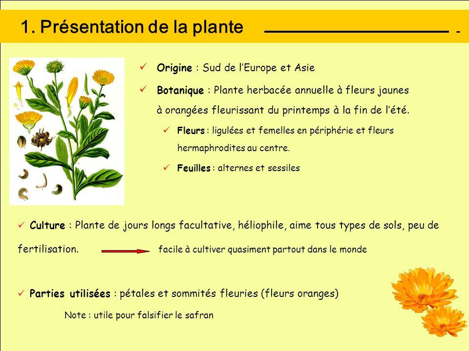 1. Présentation de la plante