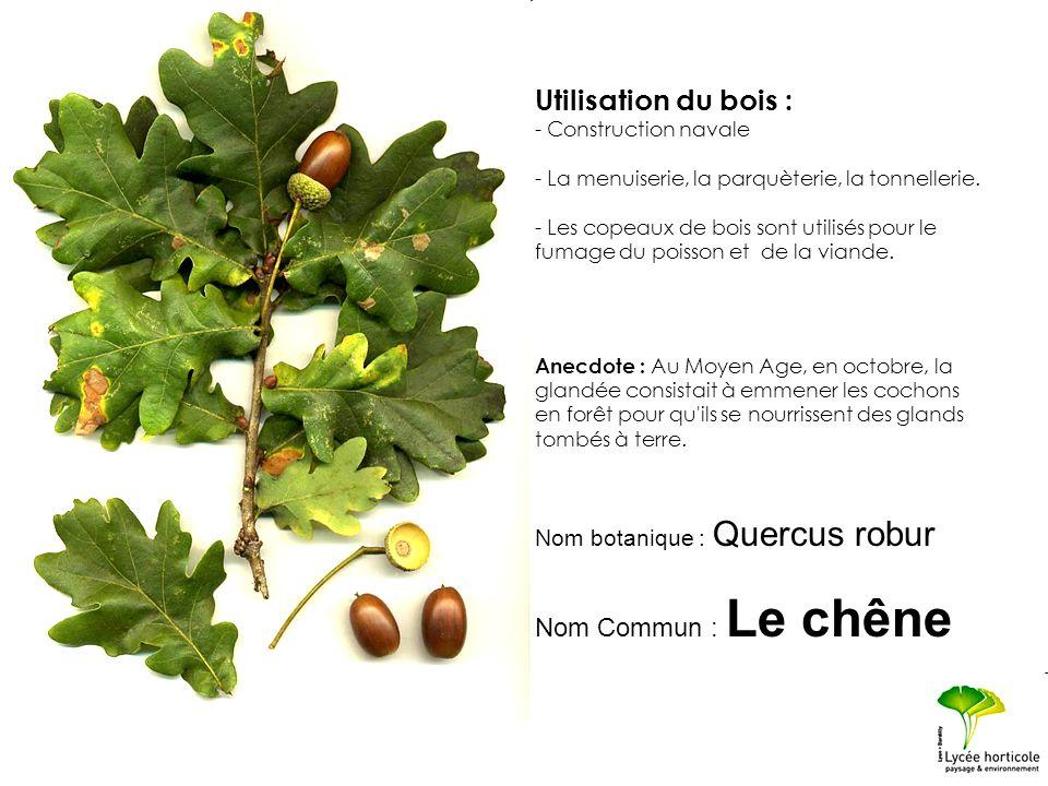 Utilisation du bois : Nom Commun : Le chêne