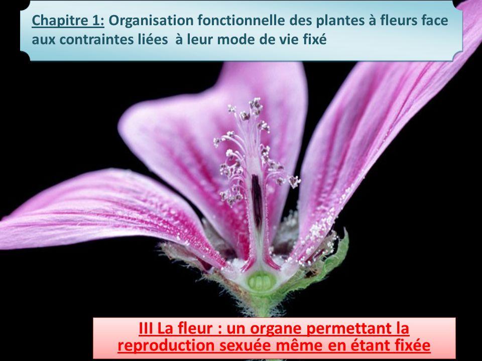 Chapitre 1: Organisation fonctionnelle des plantes à fleurs face aux contraintes liées à leur mode de vie fixé