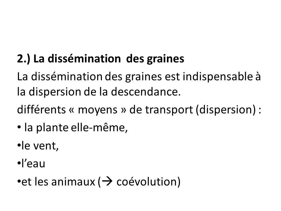 2.) La dissémination des graines
