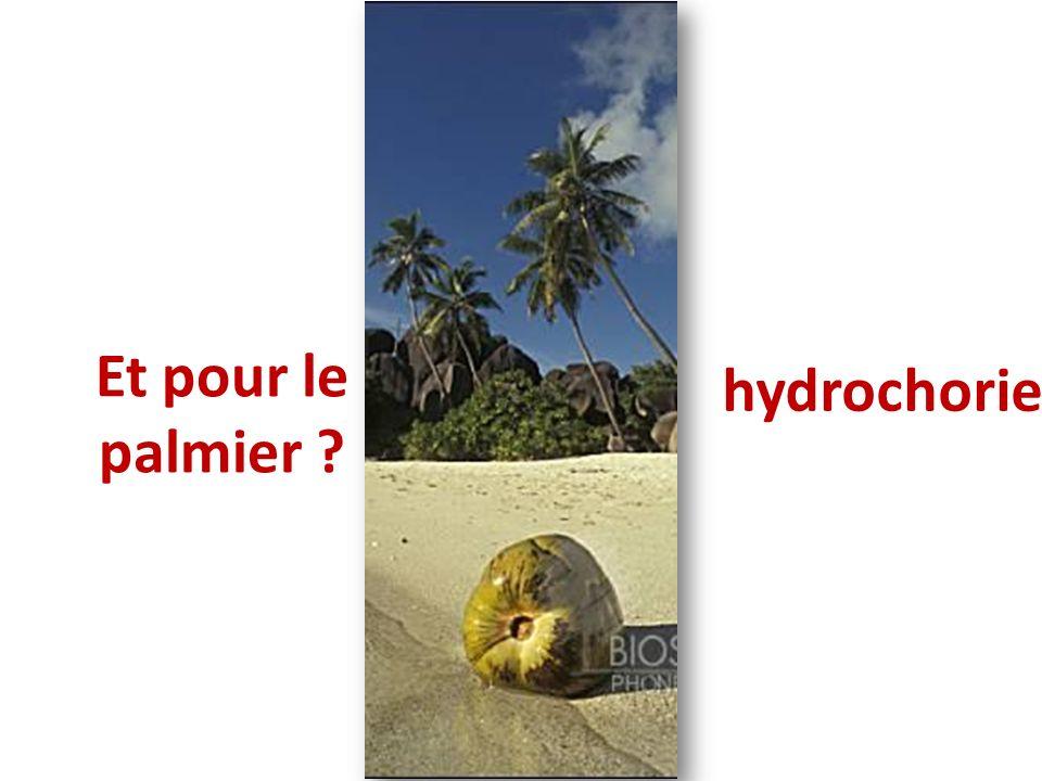 hydrochorie Et pour le palmier