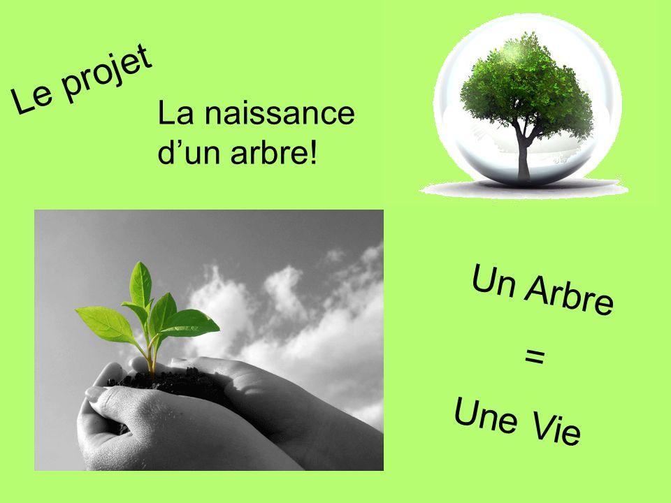 Le projet La naissance d'un arbre! Un Arbre = Une Vie