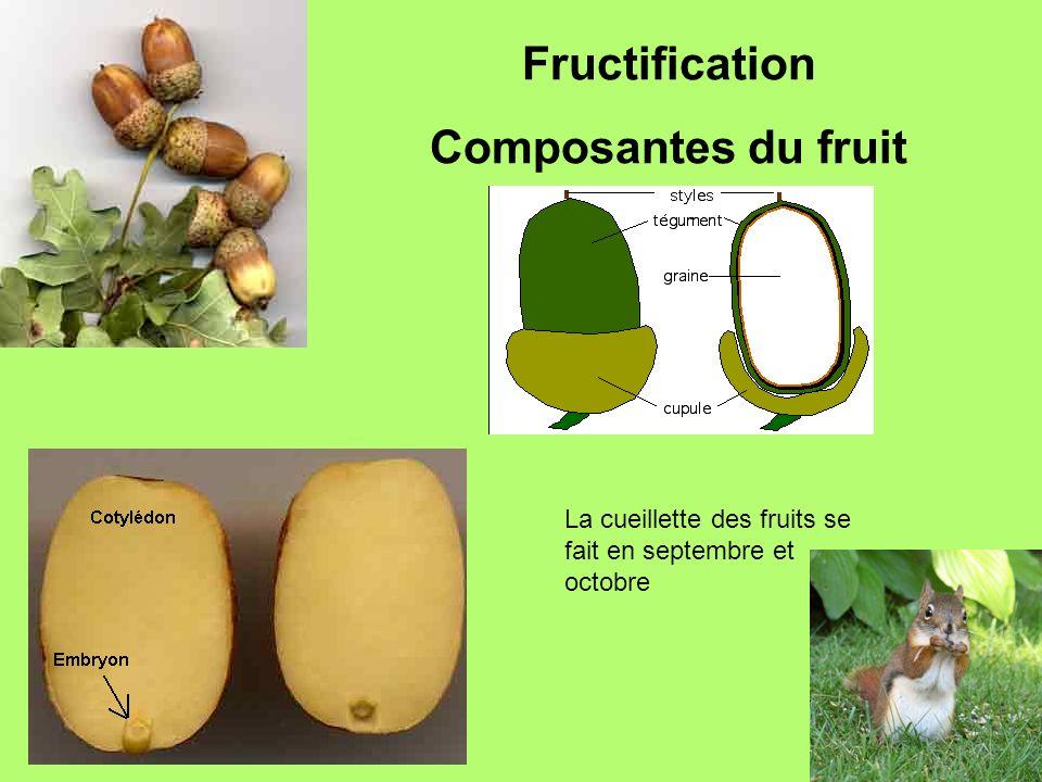 Fructification Composantes du fruit