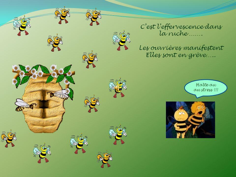 C'est l'effervescence dans la ruche …….