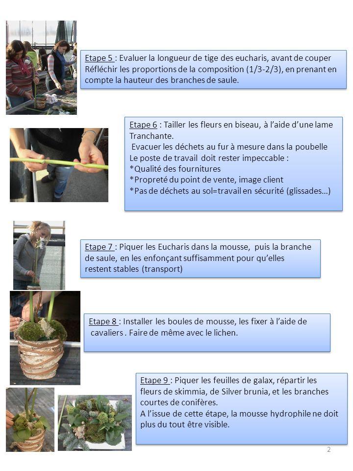 Etape 5 : Evaluer la longueur de tige des eucharis, avant de couper