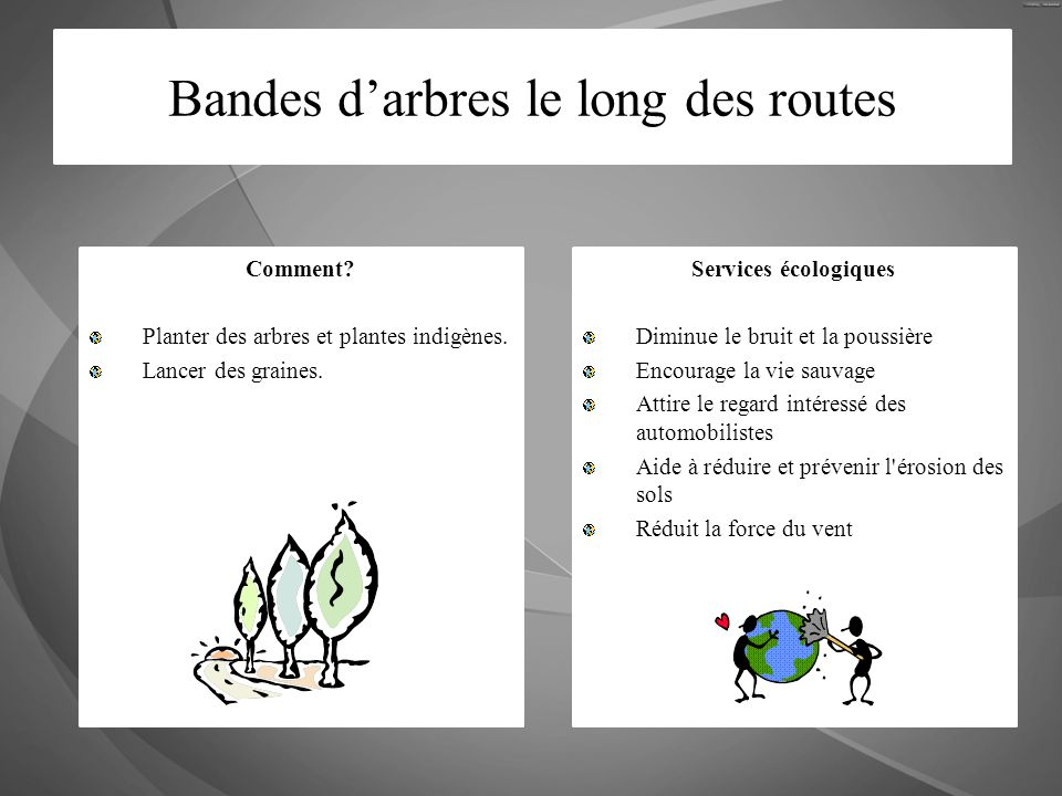 Bandes d'arbres le long des routes