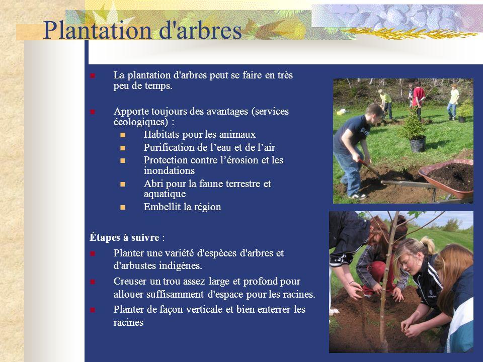 Plantation d arbres La plantation d arbres peut se faire en très peu de temps. Apporte toujours des avantages (services écologiques) :
