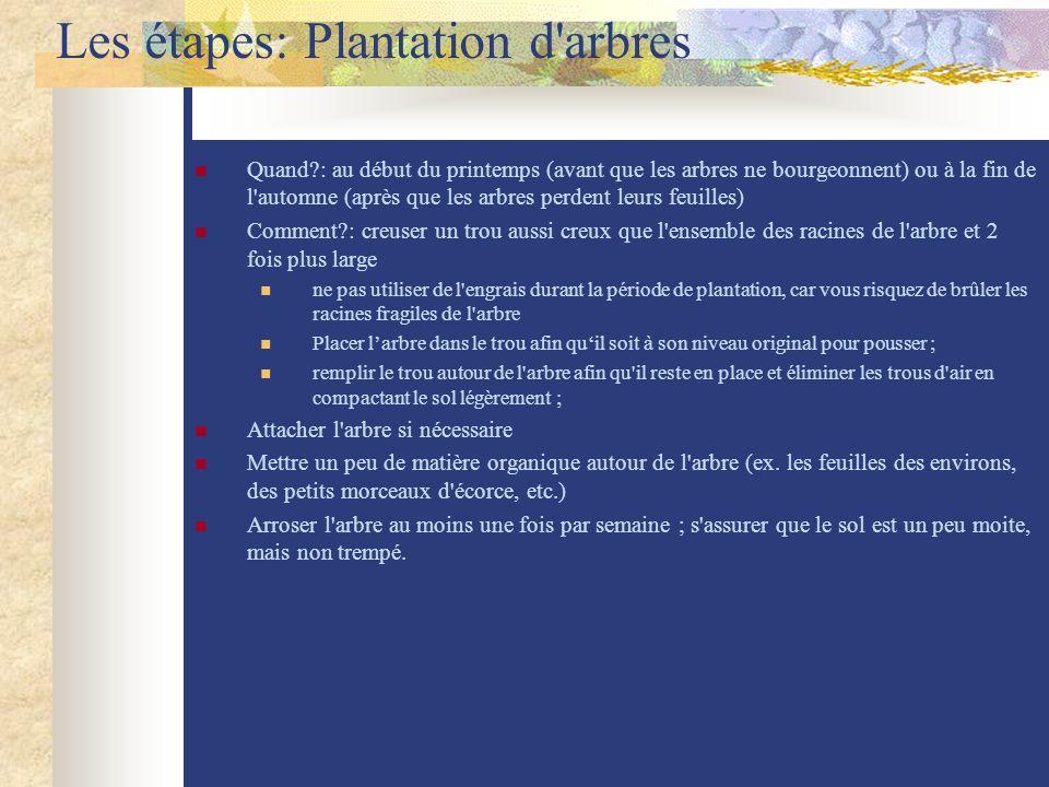 Les étapes: Plantation d arbres