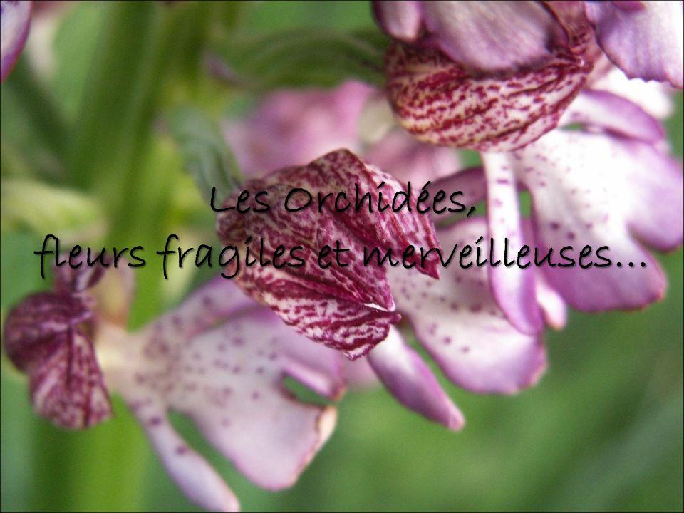 fleurs fragiles et merveilleuses…