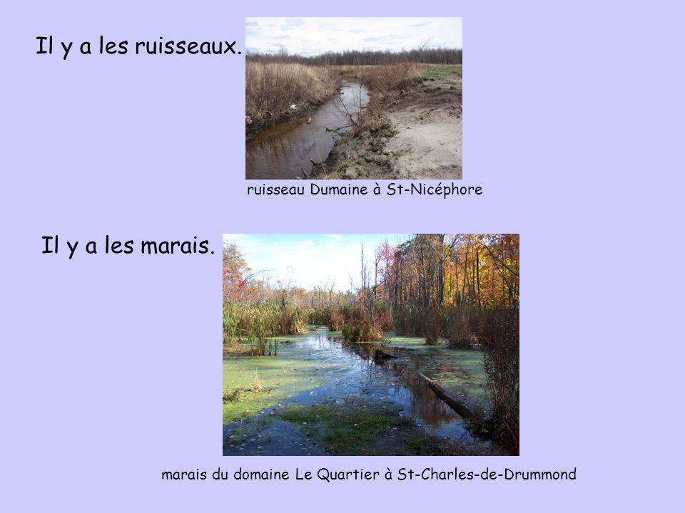Il y a les ruisseaux. Il y a les marais.